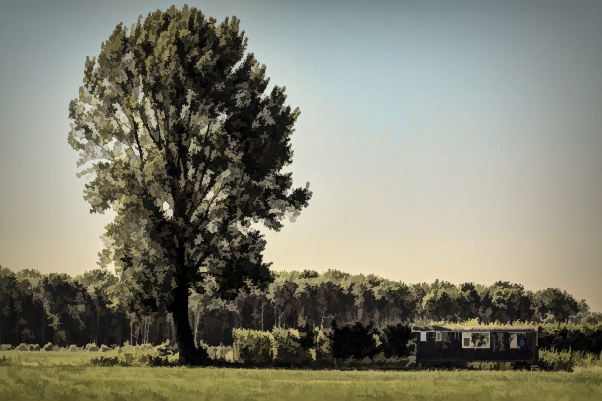 dick-jeukens-bomen-6050
